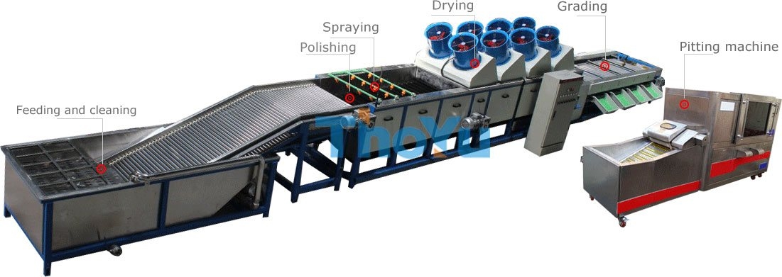 fruit grading pitting line