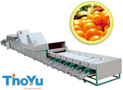 Fruit washing waxing drying sorting machine