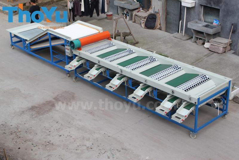 Large capacity garlic bulb sorting machine to Egypt