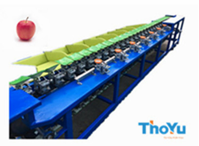 apple weight sorting machine