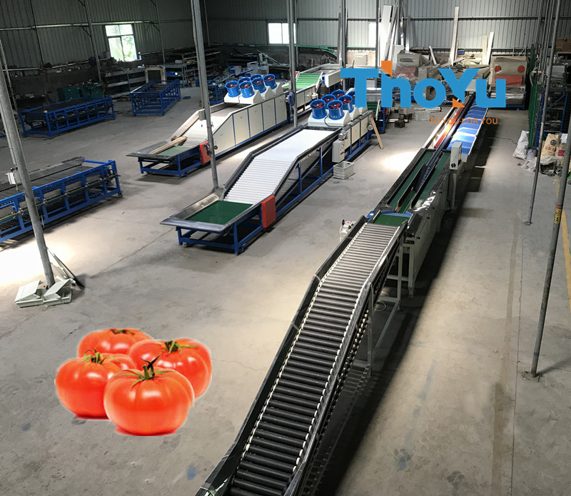 automatic tomato weight grader