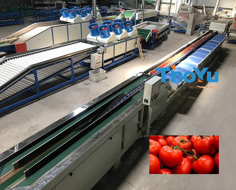 automatic tomato weight grading machine